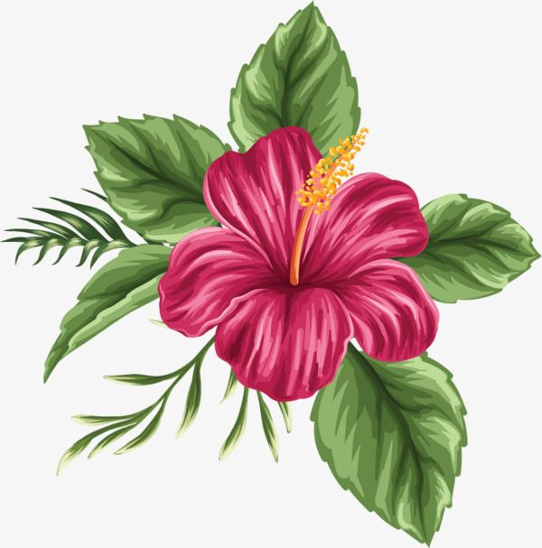 Hand Painted Hibiscus Flower, Flower Clipart, Hibiscus Flower.