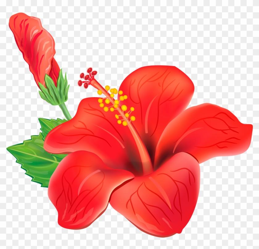 Hawaiian Flowers Png.