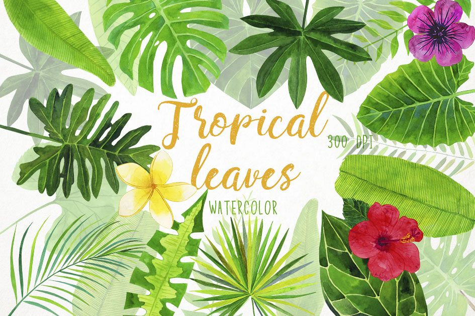 Watercolor Tropical Leaves Clipart, Palm Leaves Clip Art.