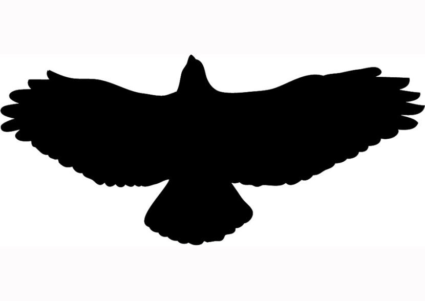 Free hawk clipart 2.