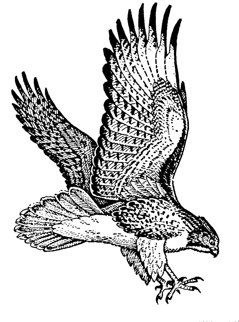Hawk clipart 3.