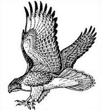 Free Hawk Clipart Black And White, Download Free Clip Art, Free Clip.