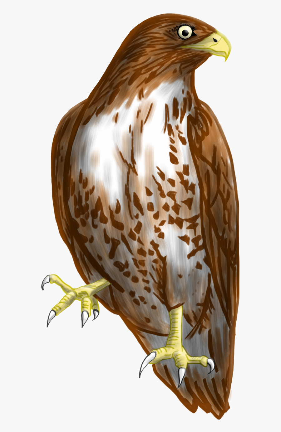 Transparent Background Hawk Clipart , Free Transparent.