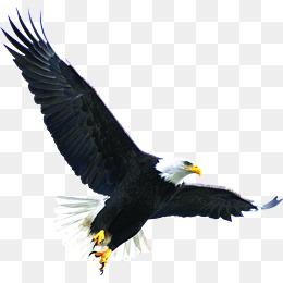 Hawk Png & Free Hawk.png Transparent Images #2499.