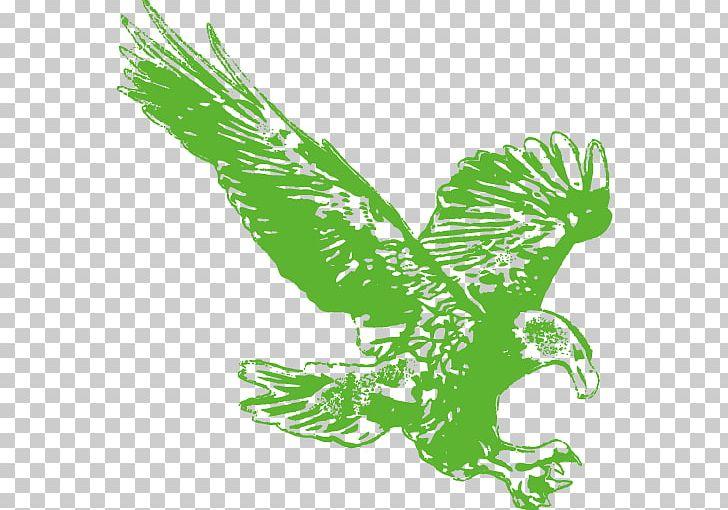 Flight Hawk Wing PNG, Clipart, Angels Wings, Angel Wing.