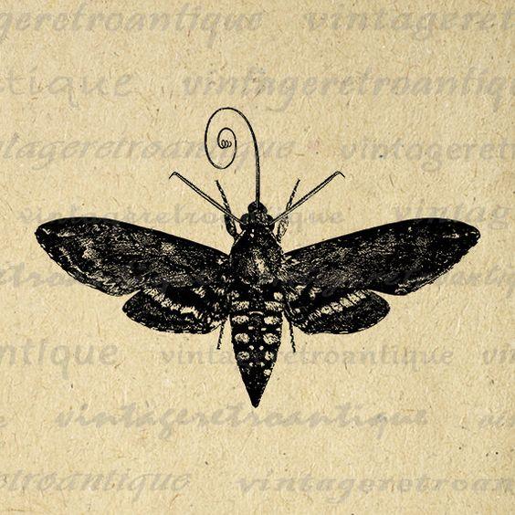 Hawk Moth Printable Image Graphic Insect Illustration Digital.