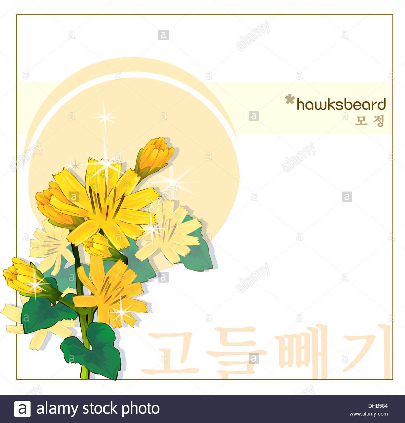 Korean Characters, Nature, Hawksbeard, Templet, Plant, Hangeul.
