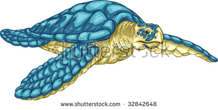 Hawksbill Turtle Stock Images, Royalty.