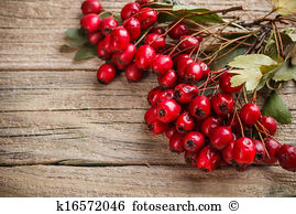 Hawthorn berry Stock Photos and Images. 1,494 hawthorn berry.