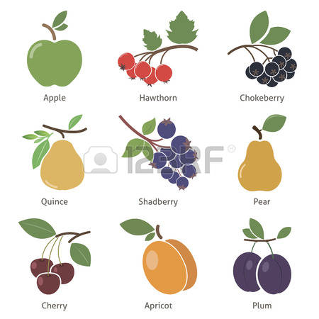 428 Hawthorn Cliparts, Stock Vector And Royalty Free Hawthorn.