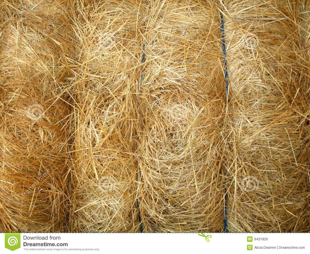 Tied Hay Bale Royalty Free Stock Images.