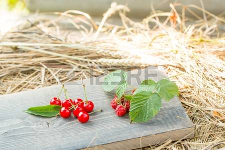 Hay Berry Stock Photos, Pictures, Royalty Free Hay Berry Images.
