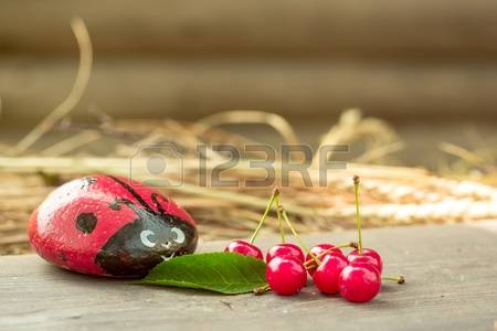 Hay Berries Stock Photos Images. 483 Royalty Free Hay Berries.