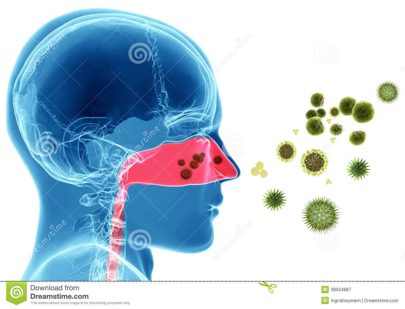 Hay Fever Stock Illustrations.