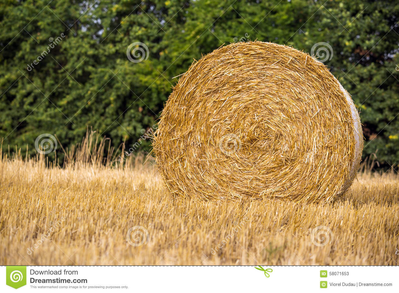 Harvest Time Stock Photography.