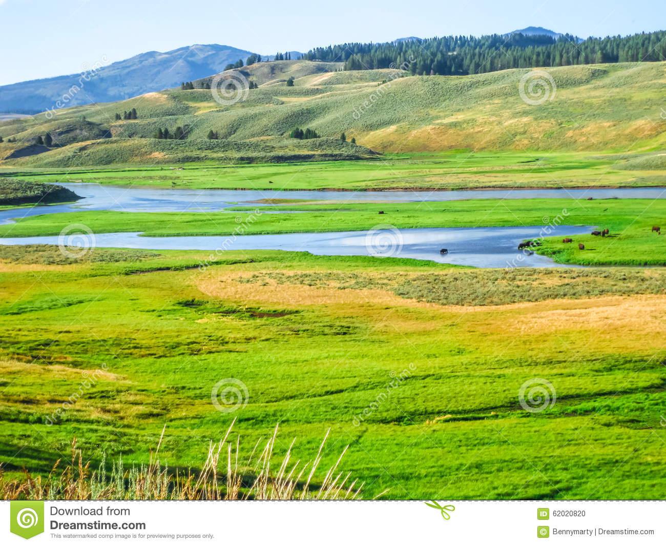 Yellowstone Hayden Valley Stock Photo.