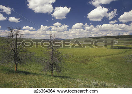 Stock Photo of Yellowstone National Park, Hayden Valley, WY.