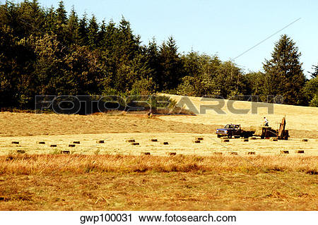 Stock Photography of Hayfield with woods in the background, NW.