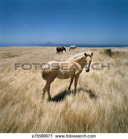 Stock Photography of Horses in open hayfield x75589071.