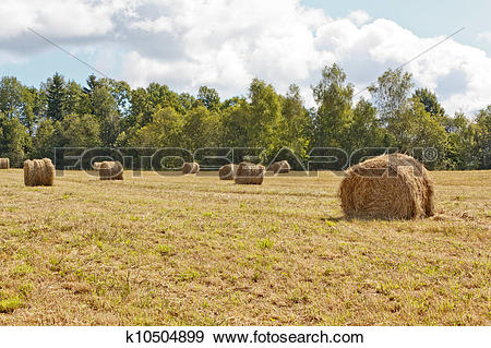 Stock Photograph of Hayfield and haystack k10504899.