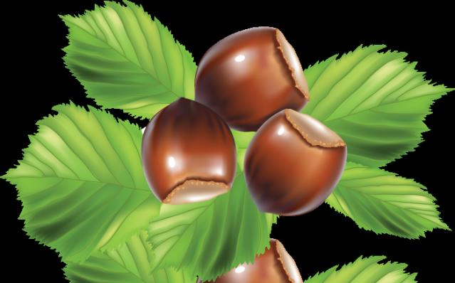 Hazelnut Clipart.
