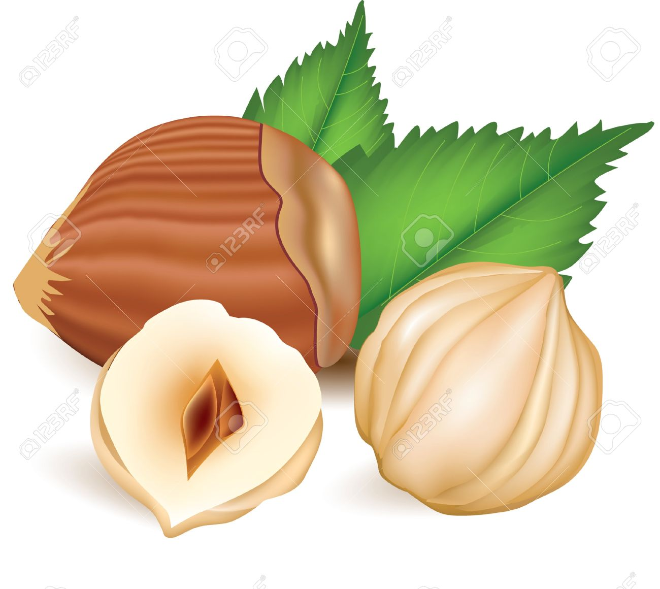 Hazelnuts With Leaves. Royalty Free Cliparts, Vectors, And Stock.