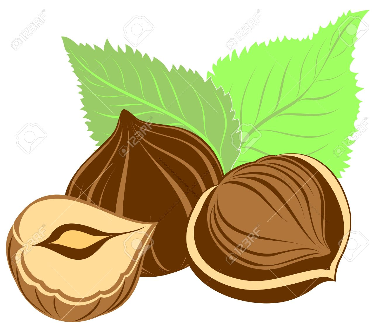 Hazelnuts With Leaves Royalty Free Cliparts, Vectors, And Stock.