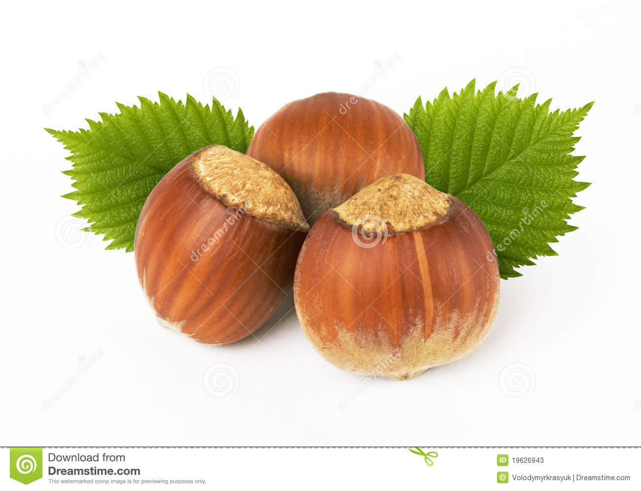 Hazelnuts With Leaves Stock Photos.