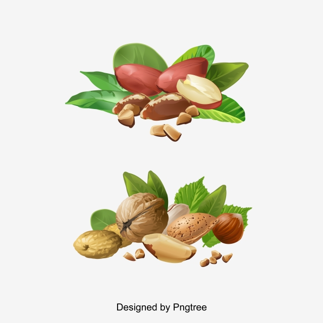 Hazelnut Png, Vector, PSD, and Clipart With Transparent Background.