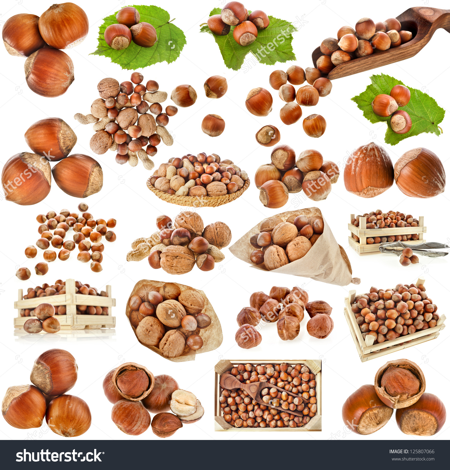 Hazelnut Filbert Nuts Collection Set Isolated Stock Photo.
