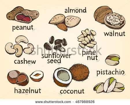 Vector Set Hand Sketched Nuts On Stock Vector 306502094.