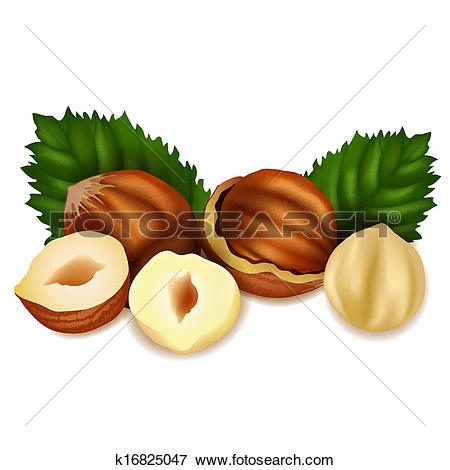 Clip Art of Hazelnuts k16825047.