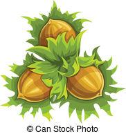 Hazelnuts Illustrations and Stock Art. 1,437 Hazelnuts.