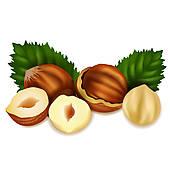 Hazelnuts Clip Art.