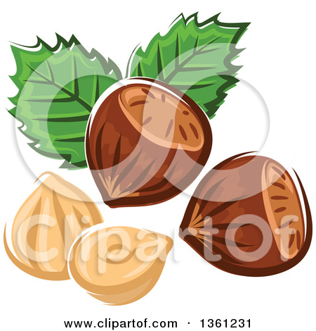 Clipart of Black and White Sketched Hazelnuts.