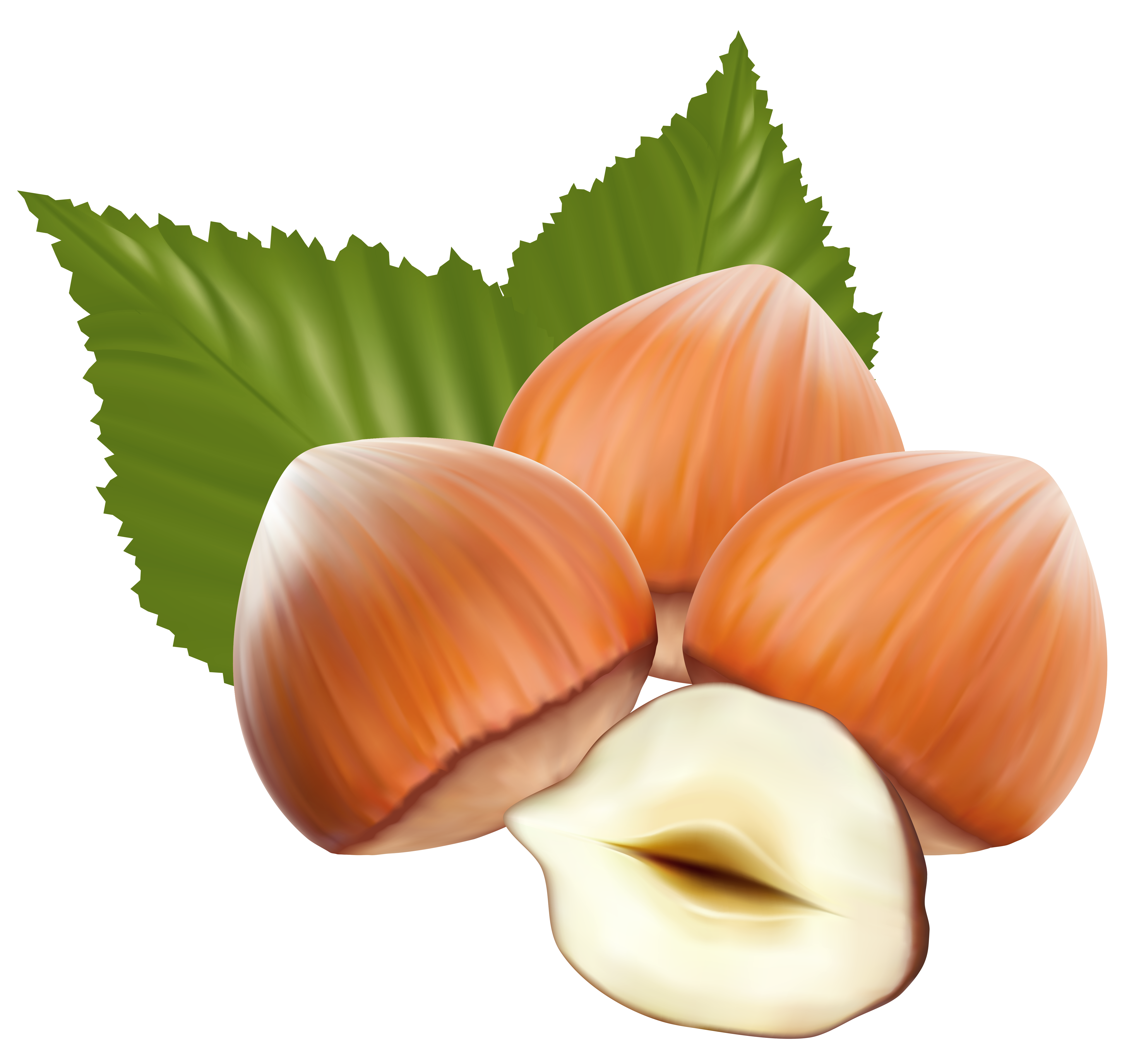 Hazelnuts PNG Clipart Image.