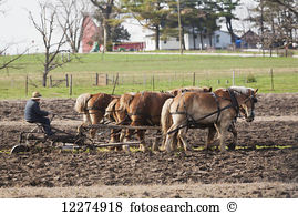 Amish Stock Photo Images. 1,323 amish royalty free images and.