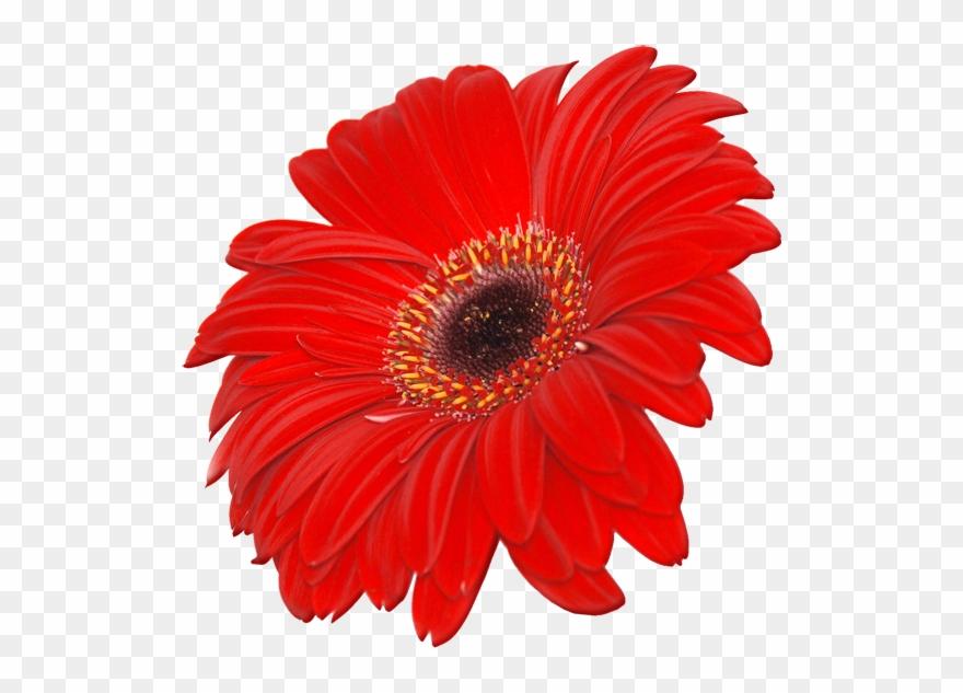 Red Flower Clipart September Flower.