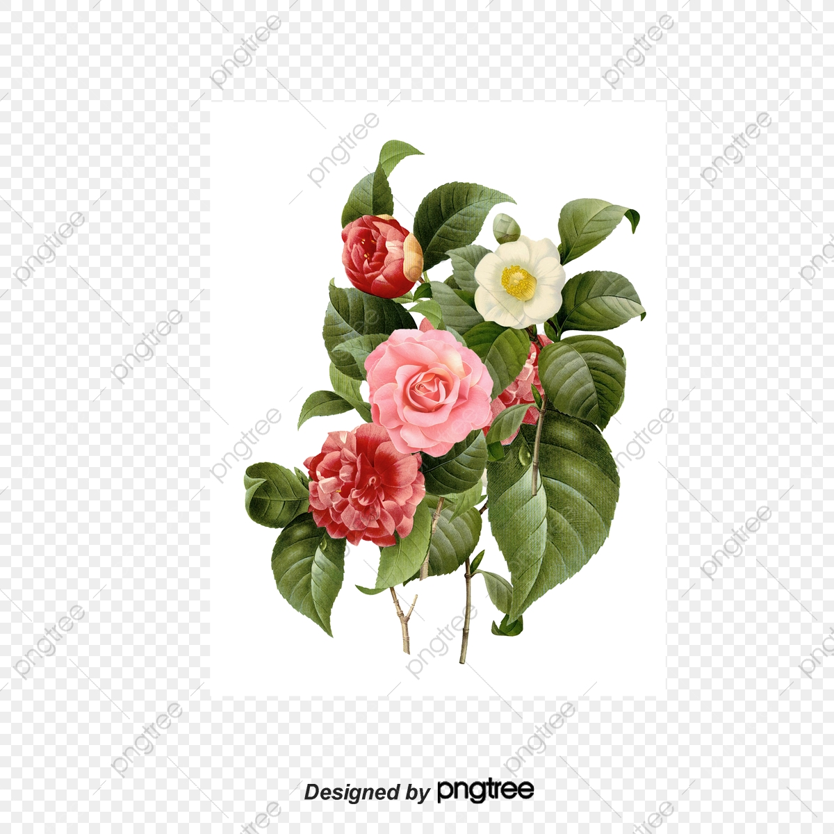 Hand Painted Flowers Hd Flowers Png, Flowers, Rose, Peony PNG.