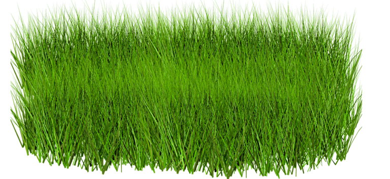 Grass PNG Images, Pictures #520475.