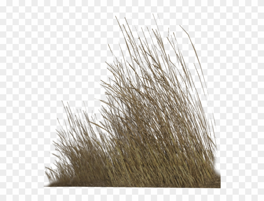 Dry Grass Png Hd , Png Download, Transparent Png.