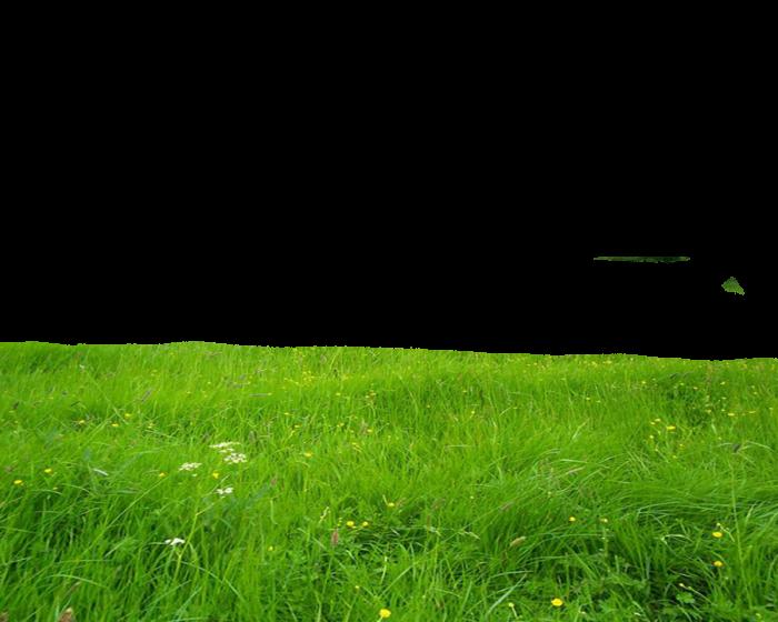 Hd Grass Png Vector, Clipart, PSD.