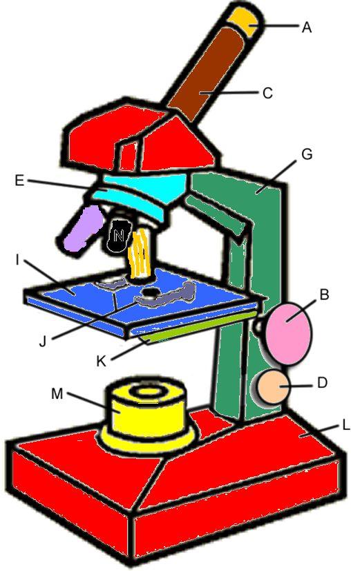 Microscope Coloring KEY.