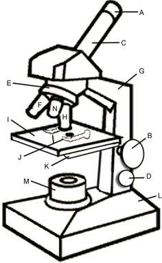 Label Of Microscope.
