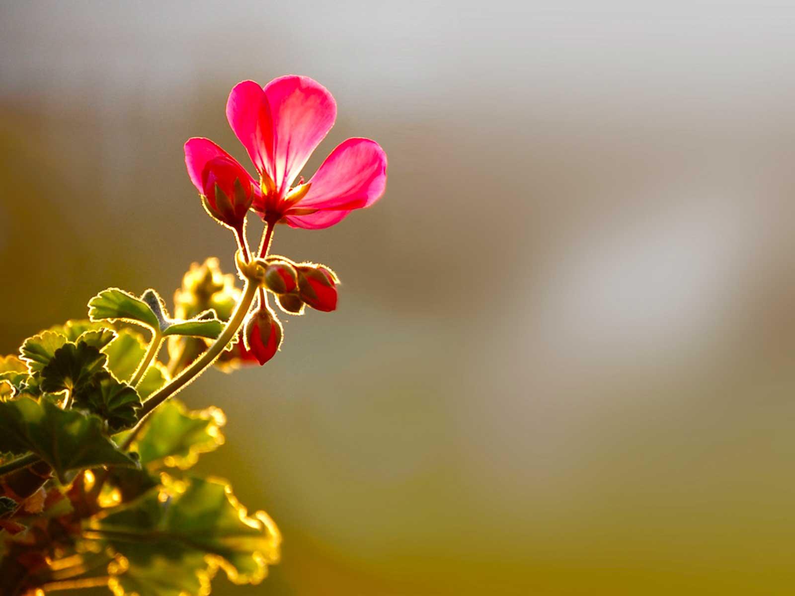 Flower HDR Background.