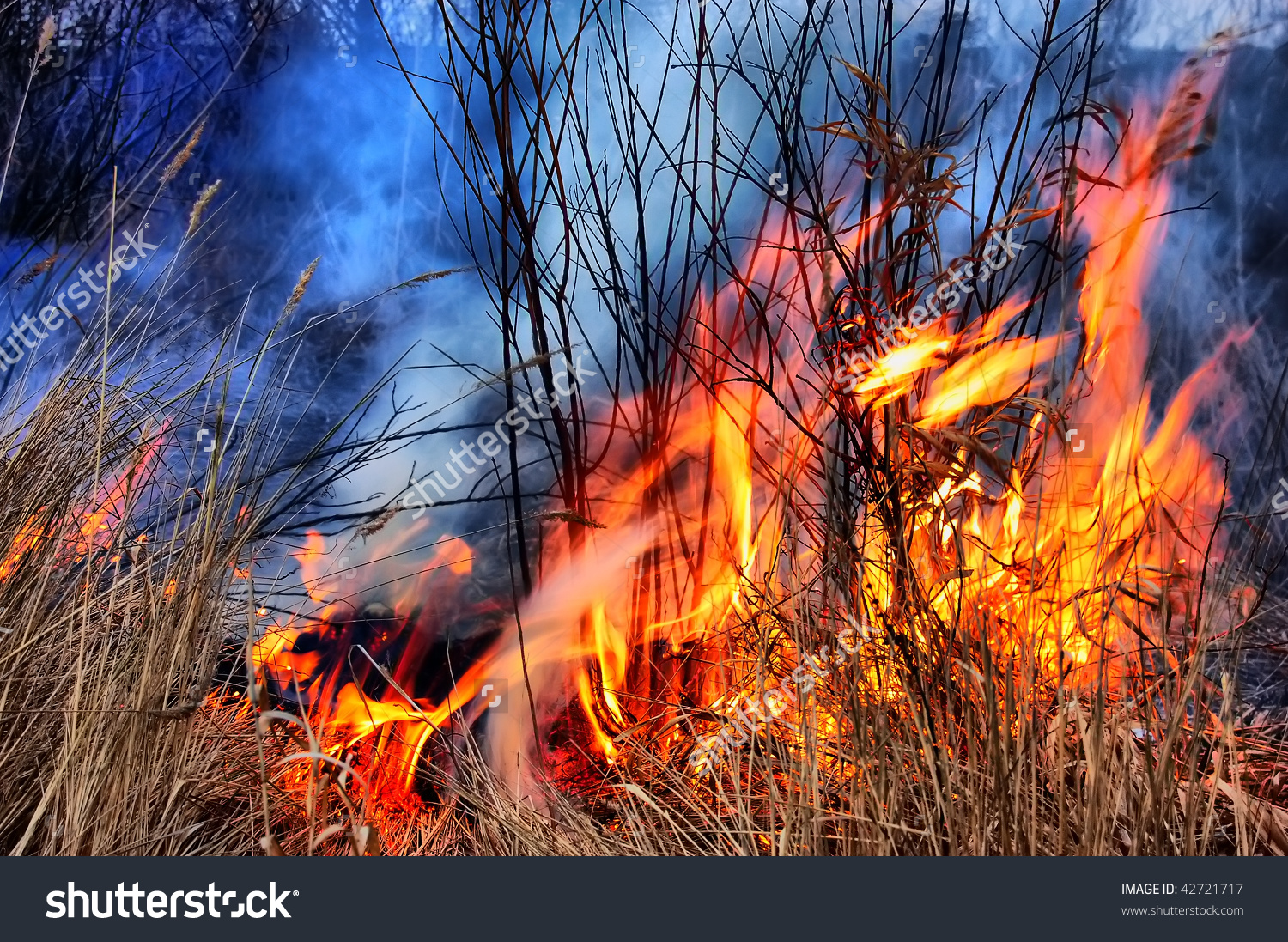 Hdr Fire Grass Stock Photo 42721717.