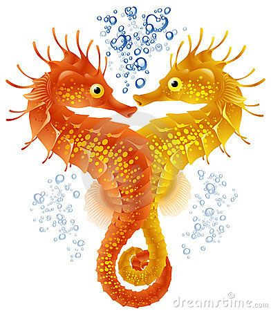 1000+ images about Seahorse on Pinterest.