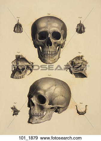 Stock Illustration of Antique Anatomical Illustration (hand.