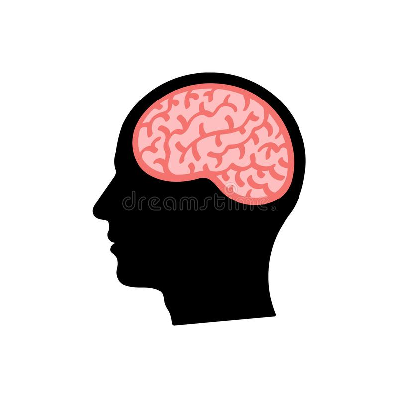 Head Brain Silhouette Stock Illustrations.