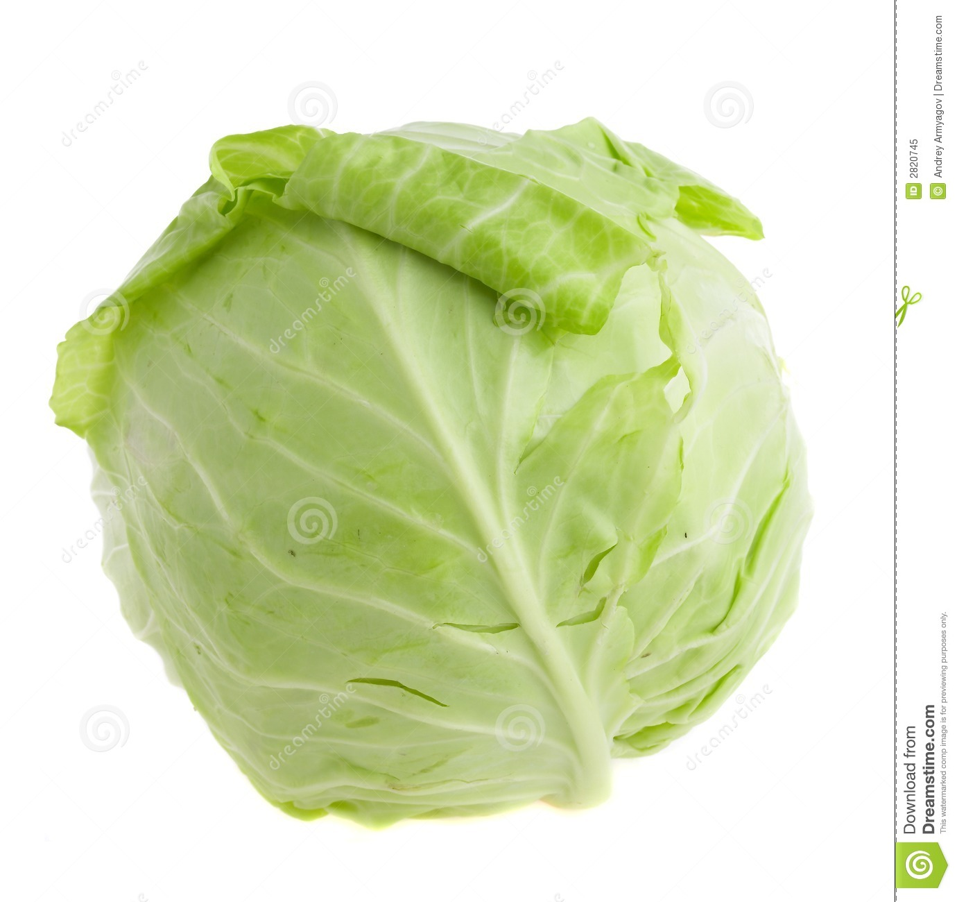 Head cabbage clipart -...